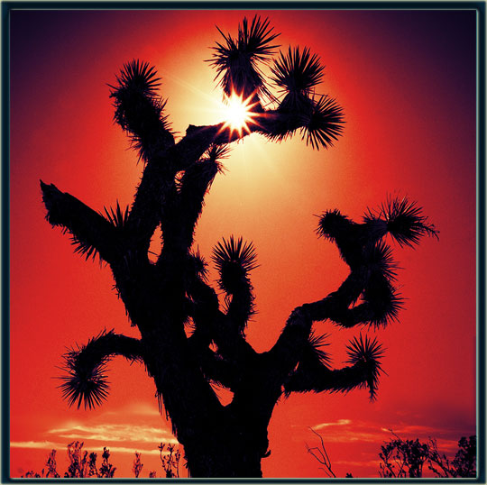 To a Joshua Tree